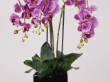 BE RADIANT (ORCHID)